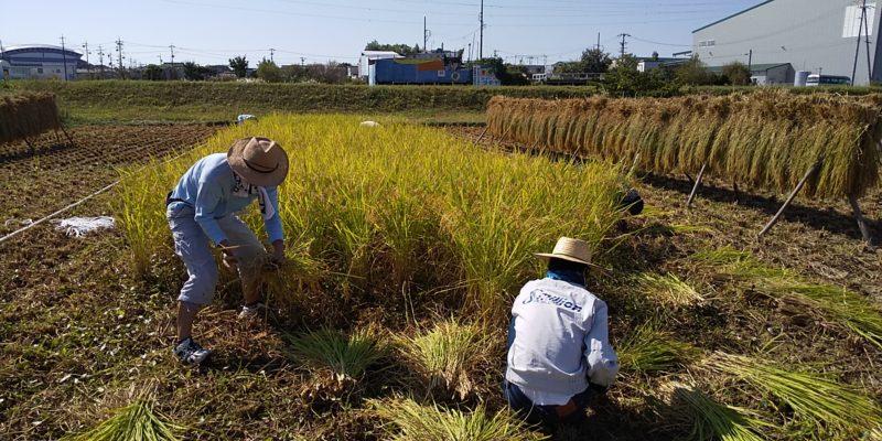 NPO法人 日進野菜塾